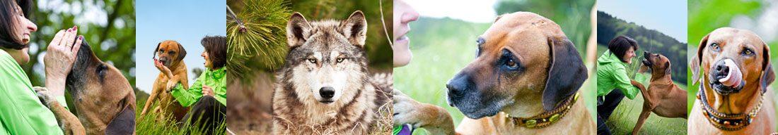 Wolfsnase